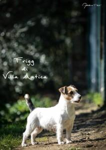 Frigg by Ginevra
