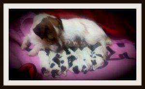 cuccioli frigg x haborym 2